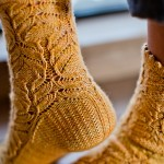Chrysanthemum Frutescens Sock