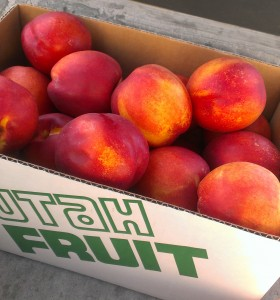 Local Nectarines